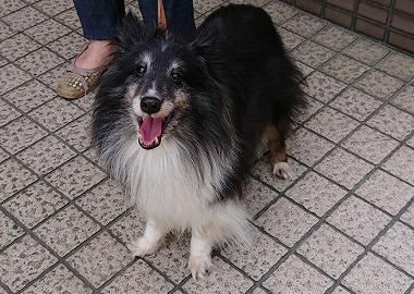 f:id:dog_life_saving:20180515113704j:image