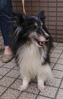 f:id:dog_life_saving:20180515113705j:image