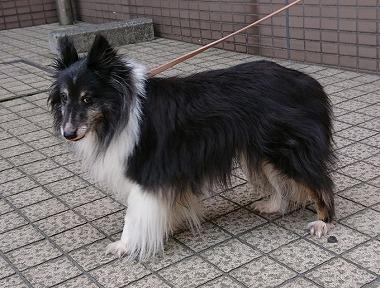 f:id:dog_life_saving:20180515113706j:image
