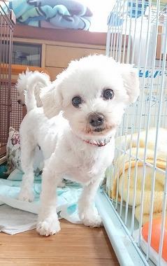 f:id:dog_life_saving:20180518130915j:image