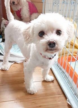 f:id:dog_life_saving:20180518130916j:image