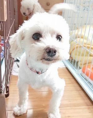 f:id:dog_life_saving:20180518130917j:image