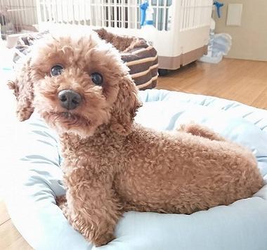 f:id:dog_life_saving:20180518130918j:image
