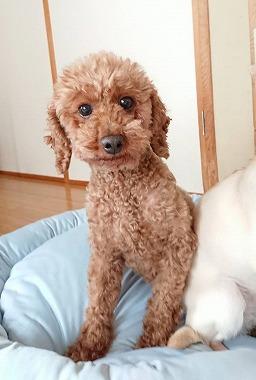f:id:dog_life_saving:20180518130919j:image