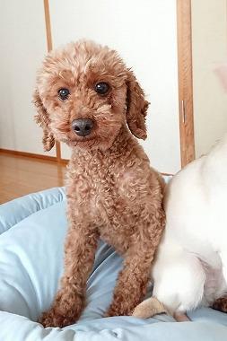 f:id:dog_life_saving:20180518130920j:image