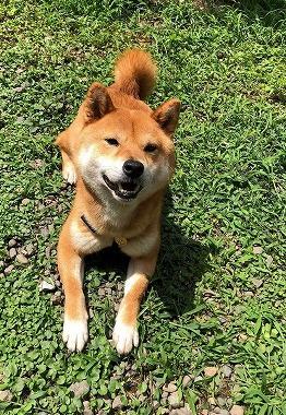 f:id:dog_life_saving:20180625154519j:image