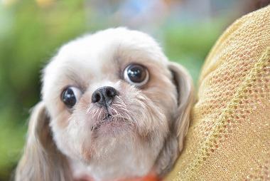 f:id:dog_life_saving:20180626151442j:image