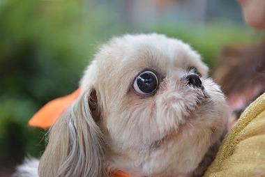 f:id:dog_life_saving:20180626151449j:image