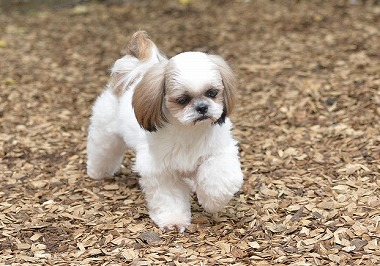 f:id:dog_life_saving:20180626151533j:image