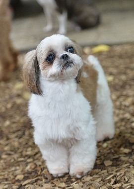 f:id:dog_life_saving:20180626151535j:image