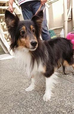 f:id:dog_life_saving:20180626151537j:image