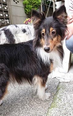 f:id:dog_life_saving:20180626151538j:image