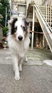 f:id:dog_life_saving:20180626151542j:image