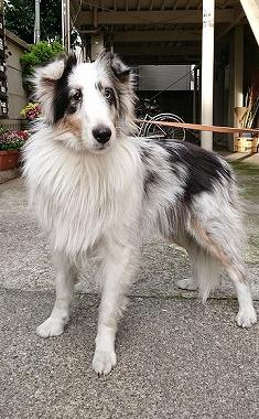 f:id:dog_life_saving:20180626151543j:image