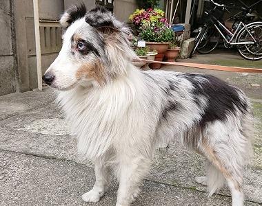 f:id:dog_life_saving:20180626151544j:image