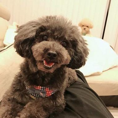 f:id:dog_life_saving:20180626151550j:image