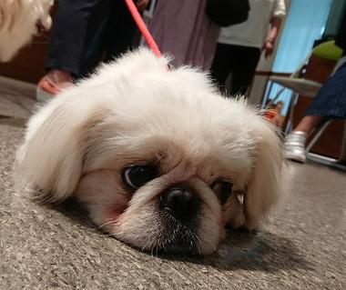 f:id:dog_life_saving:20180626151555j:image