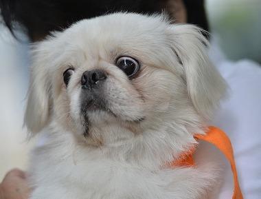 f:id:dog_life_saving:20180626151558j:image