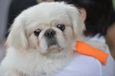 f:id:dog_life_saving:20180626151600j:image