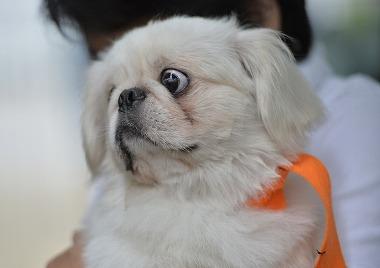 f:id:dog_life_saving:20180626151602j:image