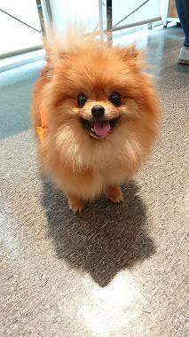 f:id:dog_life_saving:20180626151938j:image