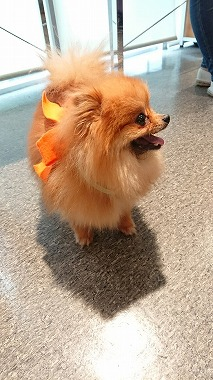 f:id:dog_life_saving:20180626151939j:image