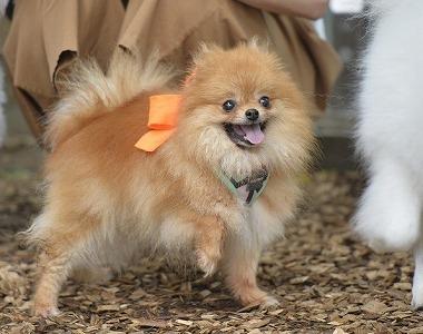f:id:dog_life_saving:20180626151942j:image