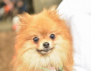 f:id:dog_life_saving:20180626151944j:image