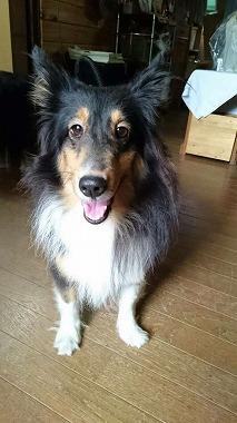 f:id:dog_life_saving:20180706150309j:image