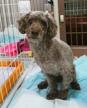 f:id:dog_life_saving:20180806145059j:image