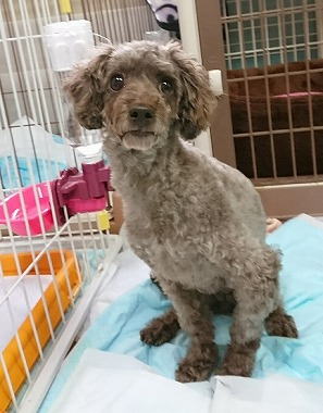 f:id:dog_life_saving:20180806145100j:image