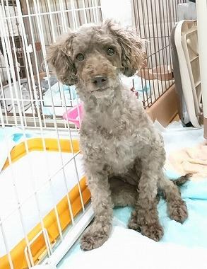 f:id:dog_life_saving:20180806145101j:image