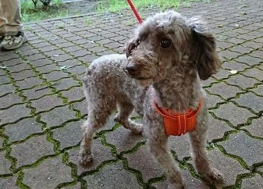 f:id:dog_life_saving:20180806145103j:image