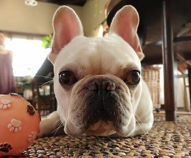 f:id:dog_life_saving:20180806145105j:image
