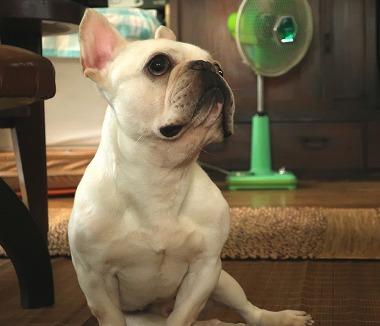 f:id:dog_life_saving:20180806145107j:image