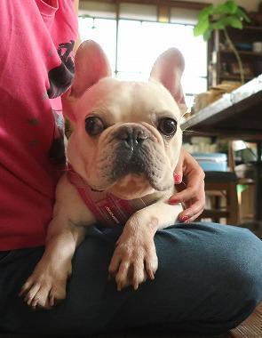 f:id:dog_life_saving:20180806145108j:image