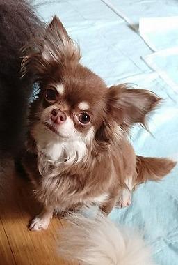 f:id:dog_life_saving:20180807140427j:image