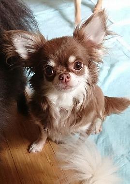 f:id:dog_life_saving:20180807140432j:image