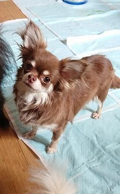 f:id:dog_life_saving:20180807140435j:image