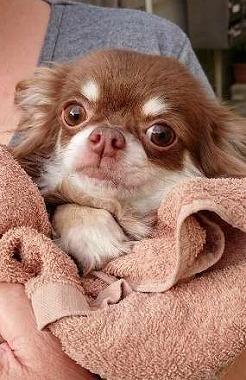 f:id:dog_life_saving:20180807140439j:image