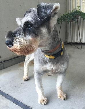 f:id:dog_life_saving:20180822144104j:image