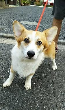 f:id:dog_life_saving:20180822152325j:image