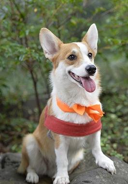 f:id:dog_life_saving:20180928143500j:image