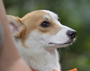 f:id:dog_life_saving:20180928143504j:image