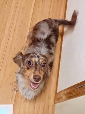 f:id:dog_life_saving:20181102141822j:image