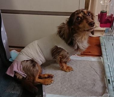 f:id:dog_life_saving:20181102141824j:image