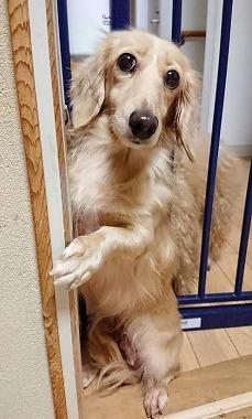 f:id:dog_life_saving:20181102141828j:image