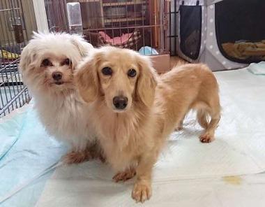 f:id:dog_life_saving:20181102141829j:image