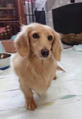 f:id:dog_life_saving:20181102141830j:image