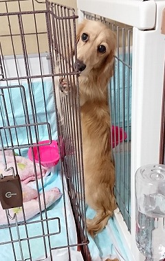 f:id:dog_life_saving:20181102141831j:image